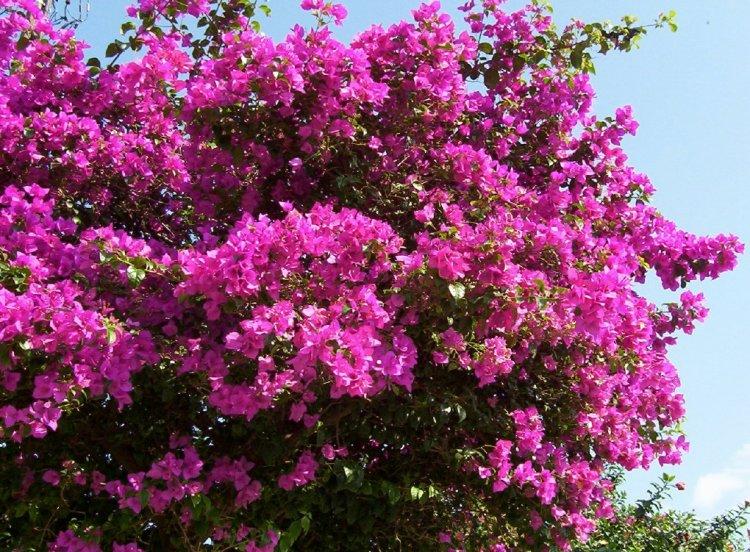 Meu pomar cuidados com as plantas na primavera - Plantas de temporada primavera ...