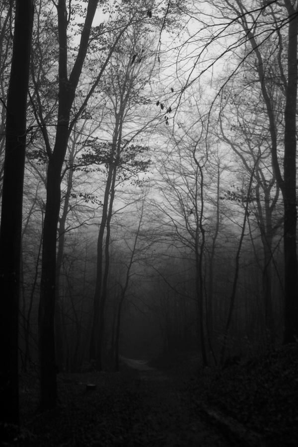 Dark Trees: Photos by MonoStep