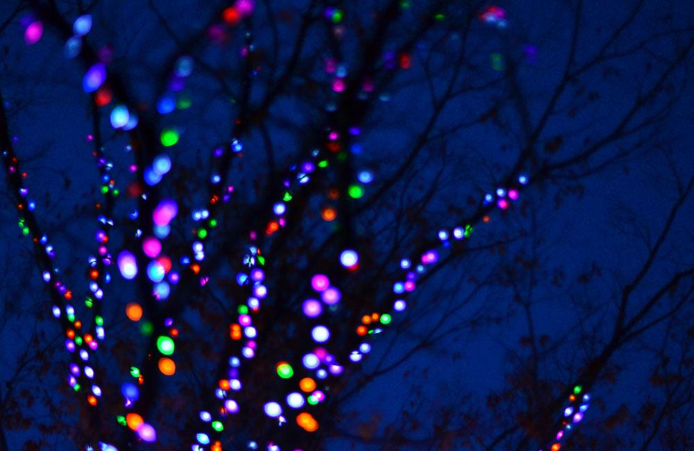 木に沿って淡く光るカラフルイルミネーション写真