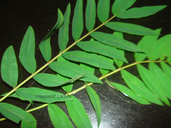 Fresh Vitamin Leaves+dosa chutney recipe