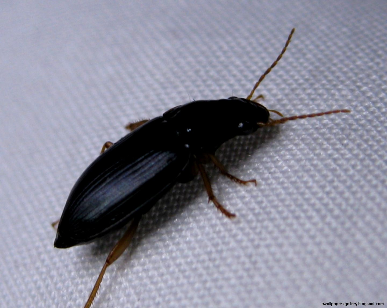 Small black ants in bathroom