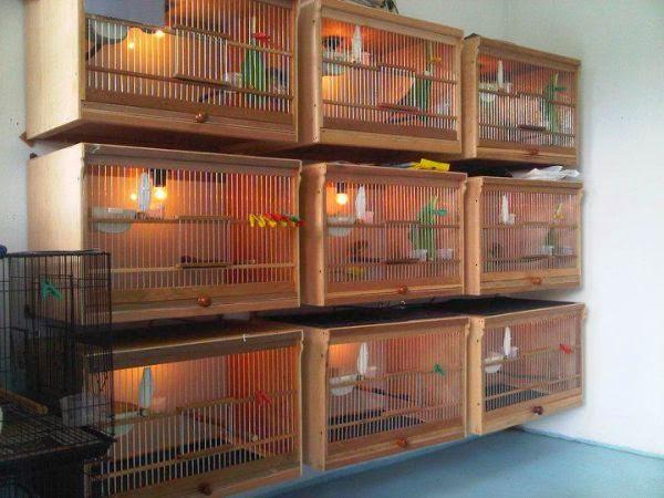 search results for �daftar harga burung kenari� � calendar