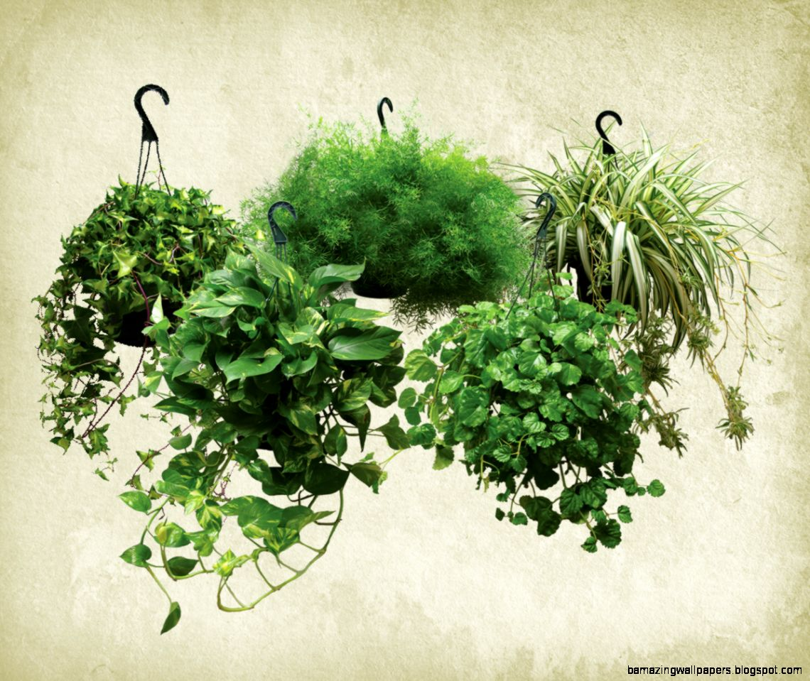 Health Benefits of Houseplants  Masson Farms Of New Mexico