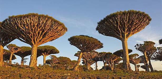 остров Сокотра Йемен