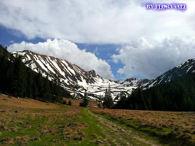 Iarna, de un alb imaculat pe varfurile muntelui cu mici pete negre