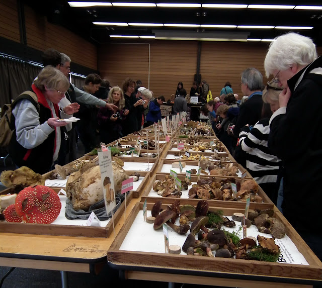 Vancouver Mushrooms Fall Show 2011