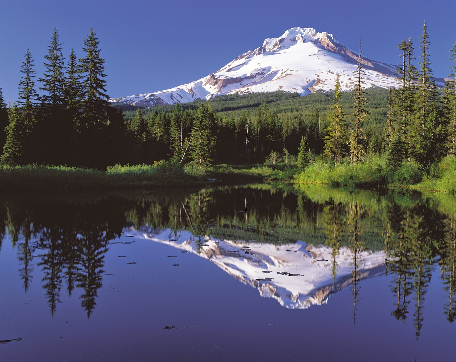By Oregon's Mt. Hood Territory. (http://www.fhwa.dot.gov/byways/photos/62736.) [Public domain], via Wikimedia Commons