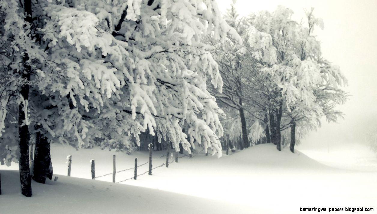 Snowy Landscape HD desktop wallpaper  High Definition