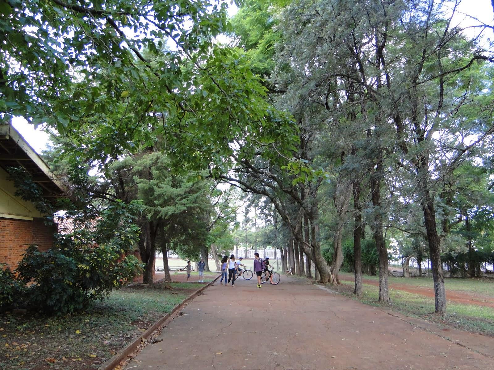 Belas árvores na Escola