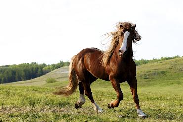 #15 Horse Wallpaper