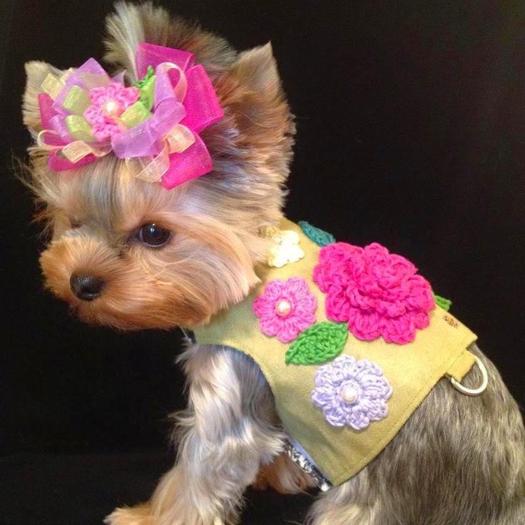 Vida de cão de luxo - roupa para cães