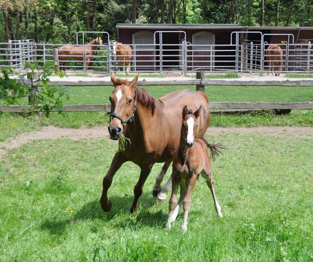 Mother horse and her foal