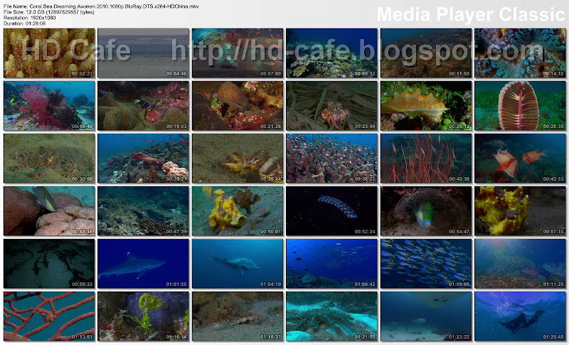 Coral Sea Dreaming - Awaken 2010 video thumbnails