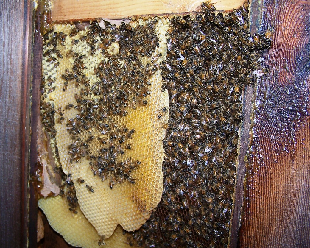 The Peace Bee Farmer: A Bee Hive Cut-out