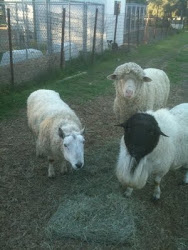 Our 3 Rams