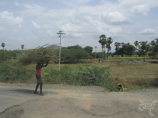 man carrying firewood in India