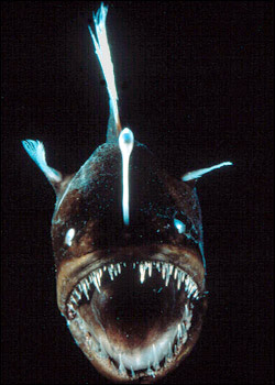 pixel joint forum: angler fish, Reel Combo