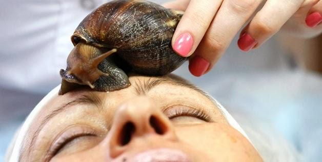 Resultado de imagen para baba de caracol