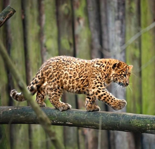 Funny animals of the week - 6 November 2015, funny animal photos, cute animals