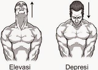 Elevasi dan depresi