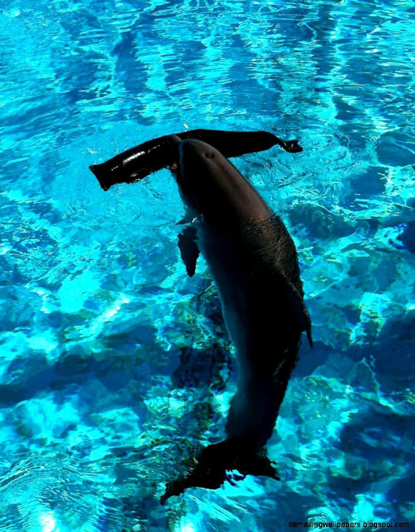 Hope the Baby Dolphin by CCFUREVA on DeviantArt