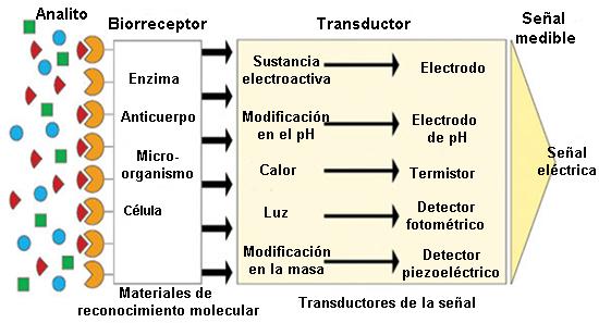 Esquema general de un biosensor