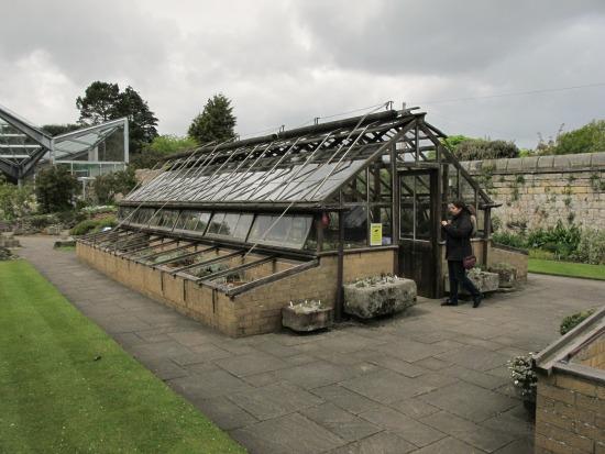 Invernadero-de-plantas-bulbosas