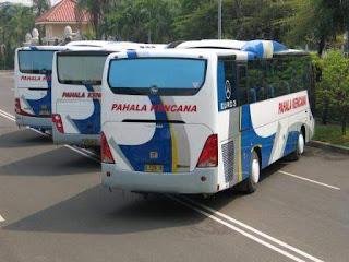 Gambar Bus : Pahala Kencana dari belakang | Ping Bus