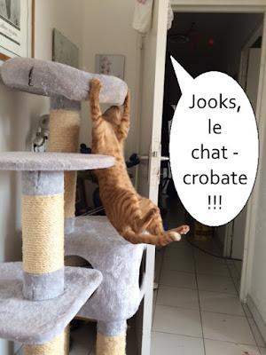 Chat roux qui fait de l'acrobatie sur un arbre à chat.