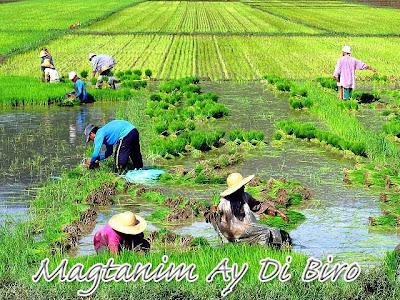 Magtanim Ay Di Biro farmer planting Philippines
