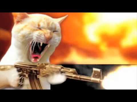 Cat Firing Gun Gif