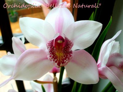 Wedding planner low cost addobbi e fiori for Costo orchidea