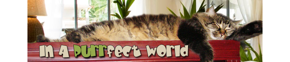 In A Purr-fect World