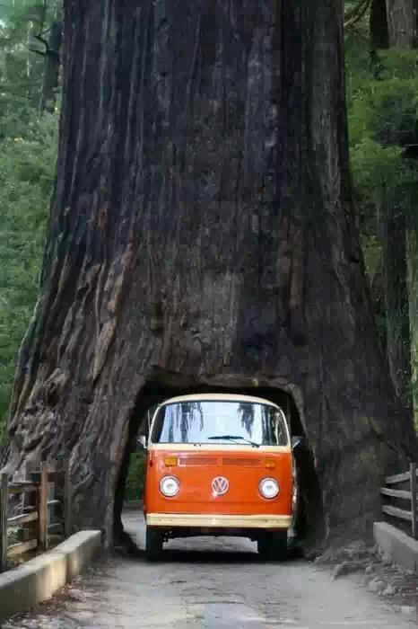 Beautiful Tree Way