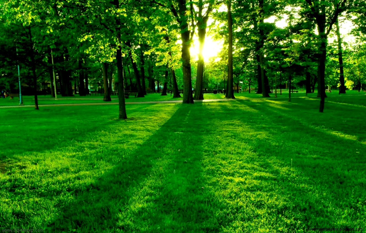 Green Nature Tree Backgrounds Wallpaper Hd Fre 4529 Wallpaper