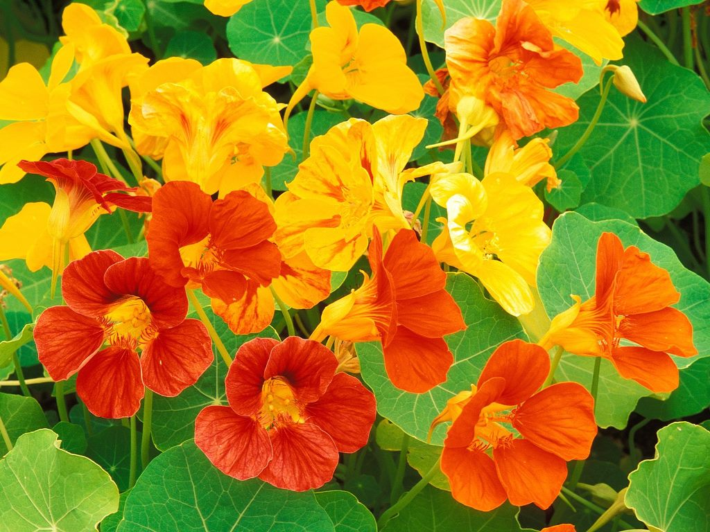 http://3.bp.blogspot.com/-g7yCS4IhZ6Y/TmRI3y2JJiI/AAAAAAAAERw/CKfXmkw7LXU/s1600/Beautiful-Flowers-110-TED9FSTC8J-1024x768.jpg