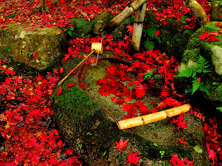 Bamboo Fountain Red Leaves HD Wallpaper