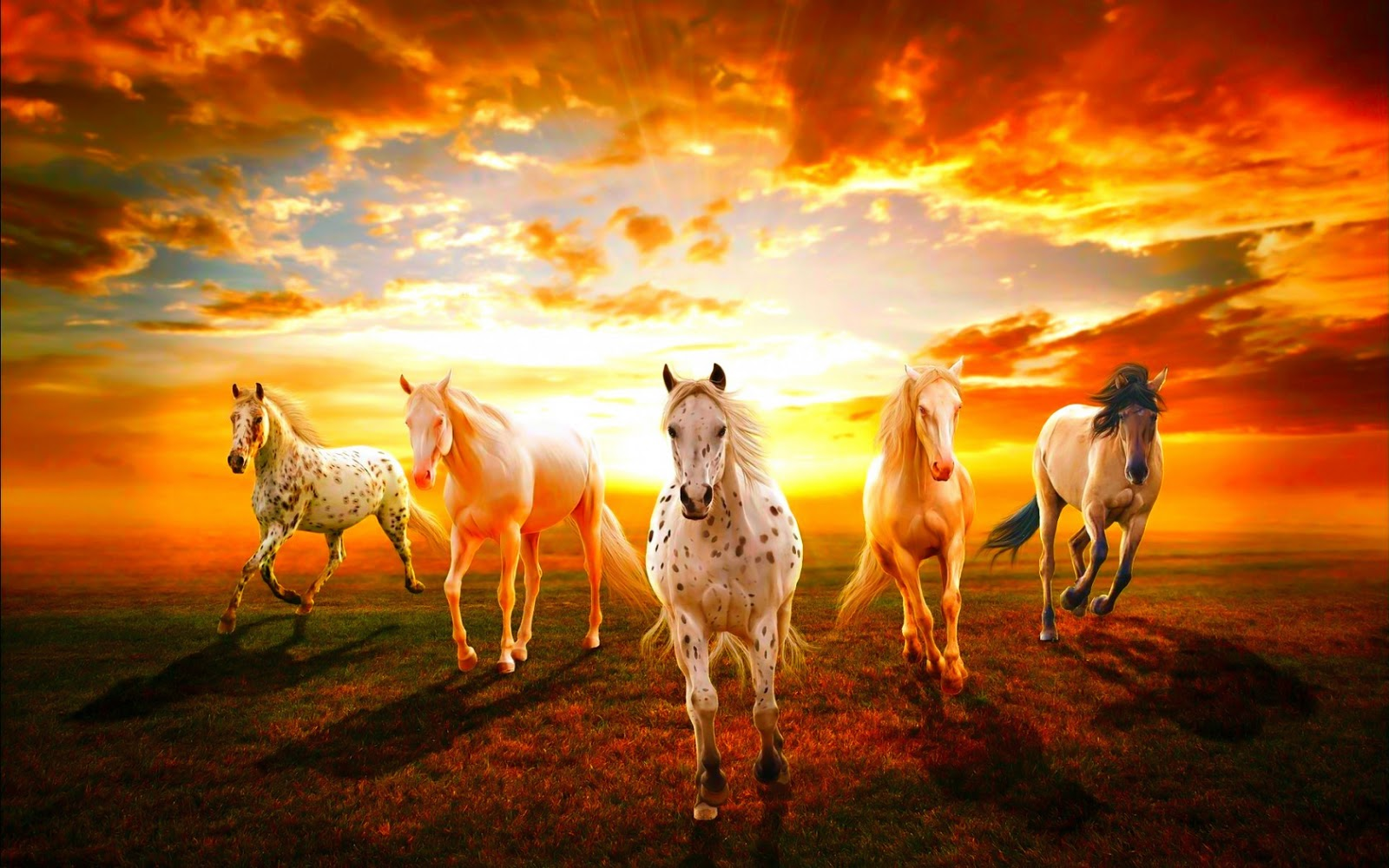 wild horse hd wallpapers - photo #13