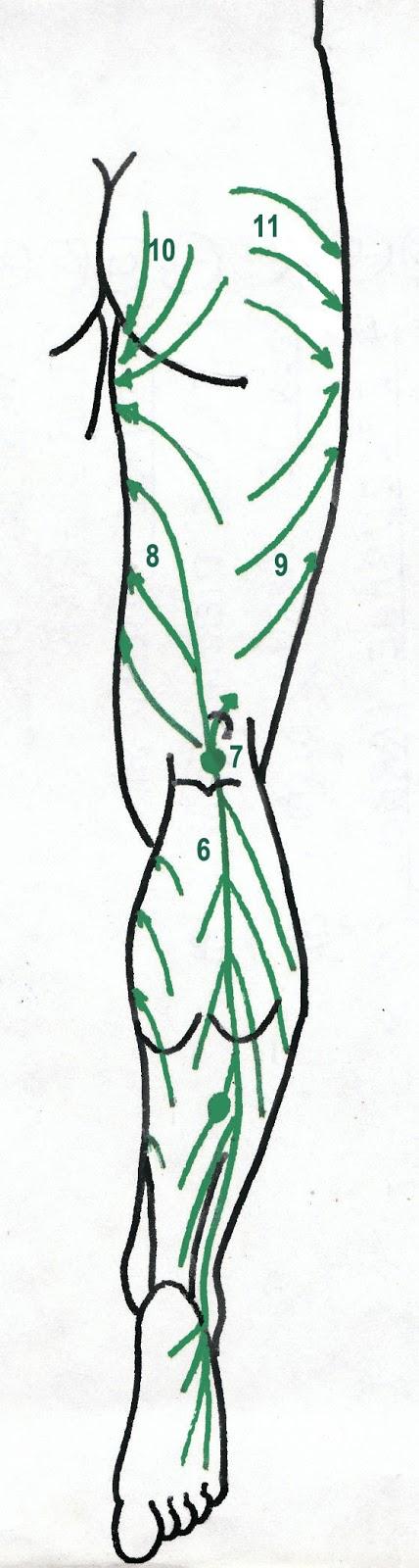 El Drenaje Linfático Manual: diciembre 2012