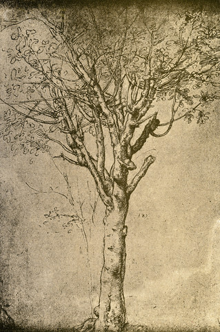 how to draw foliage with pencil
