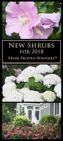 New Shrubs for 2018