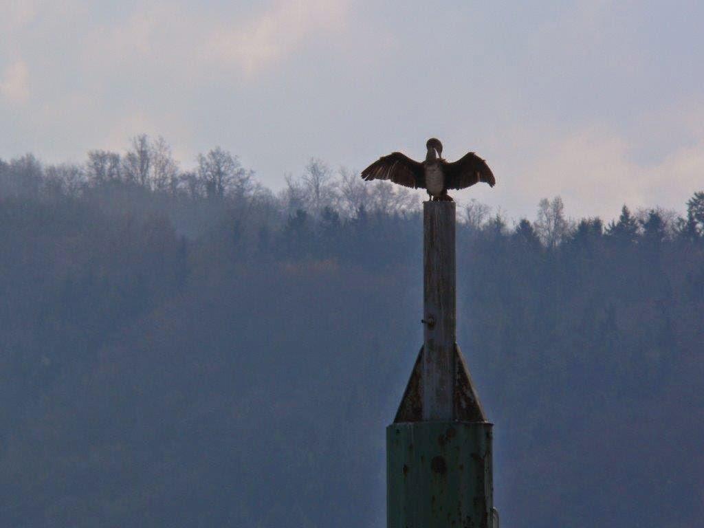 Camping Rhein Remagen Goldene Meile Frühling Ostern Vogel