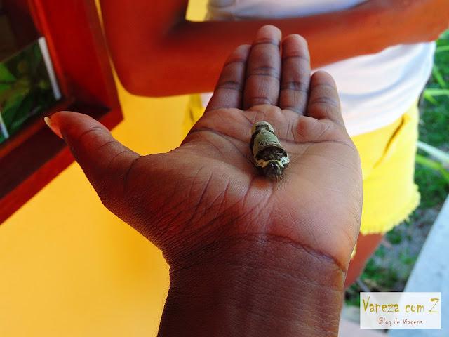 borboletario asas magicas porto seguro bahia