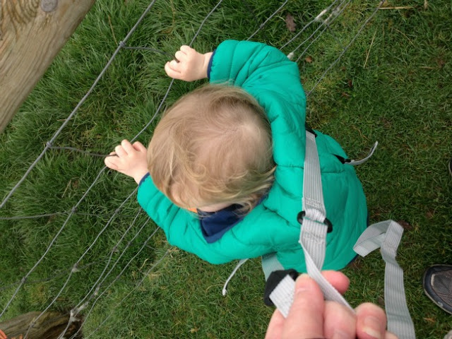 Toddler holding onto fence