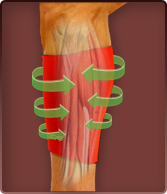 Calf Pain - Compression Treatment of Calf Pain and Strain