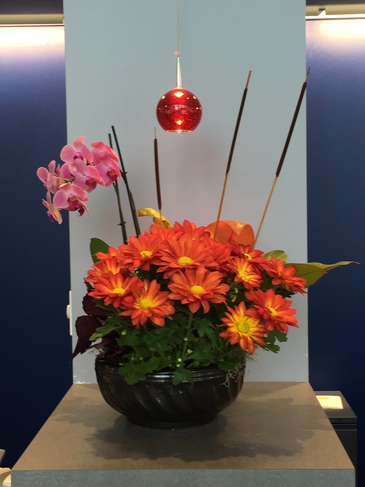 Office Plant Installations Chelmsford MA