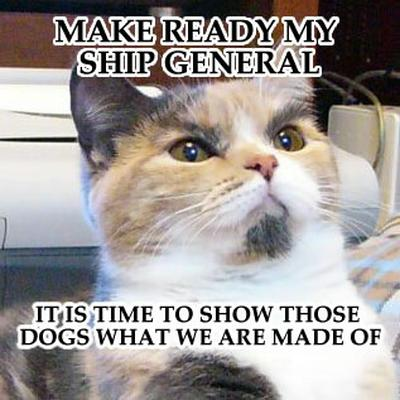 Funny Image Collection Cat Pictures With Quotes Cute