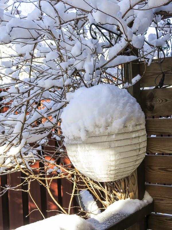 snö, kaprifol, solcellslampa
