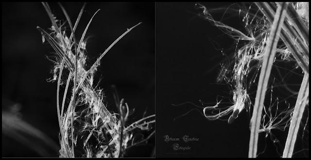 Eine Pflanze in einer Schwarz Weiß Aufnahme