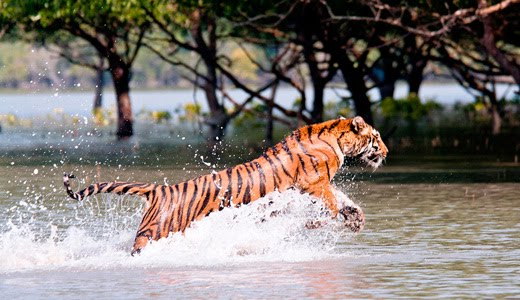 Ever Youth Tourism Leading Idol In Sundarban Tourism